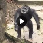 monkey-poo-1